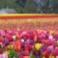 زهور الحديقه