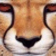 عيون النمر