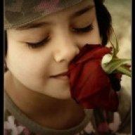 شذى الورد.