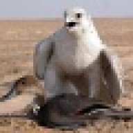 أبو جواد
